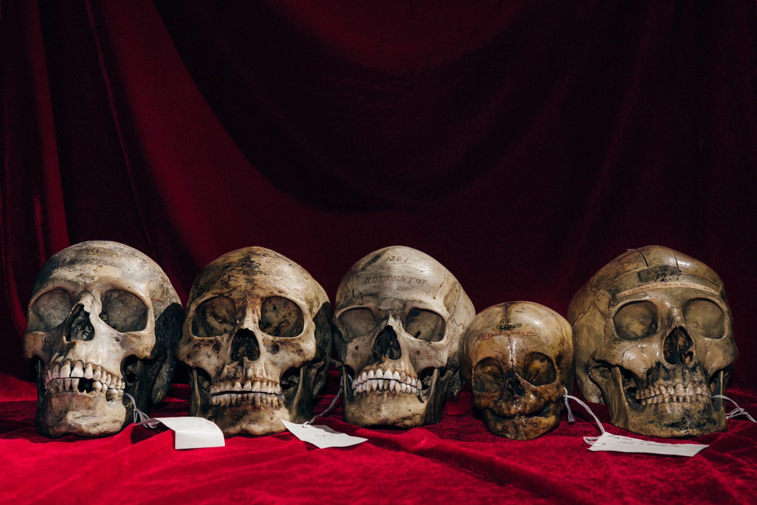 Le sourire des crânes