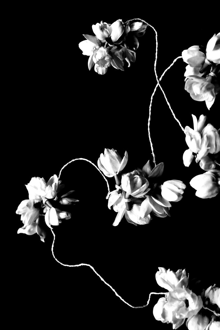 Nuit de jasmin